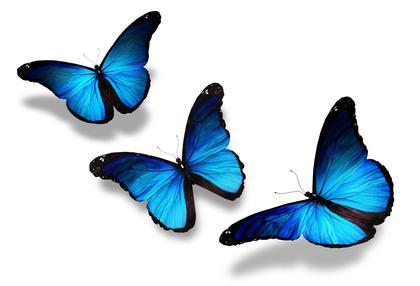 ButterFly Lymphoedema